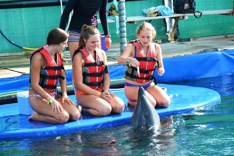 FULL DAY TO MARMARIS AND MEET THE DOLPHINS